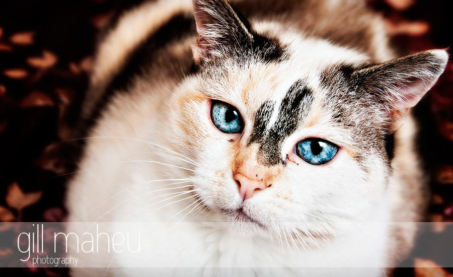 cat copyright gill maheu 2010